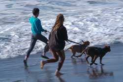 Two girls running two dogs on leashes along coast in SF, CA.